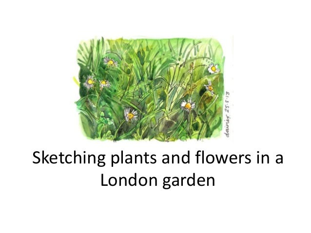 Sketching plants and flowers in a London garden