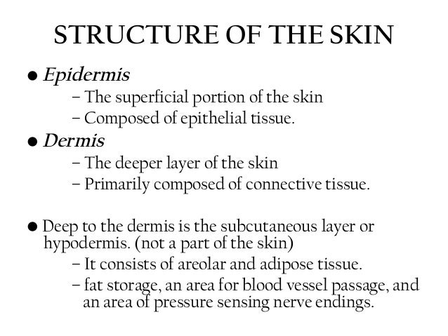 Skin anatomy & physiology for ayush students