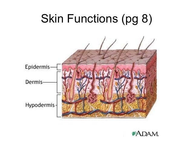 Skin Functions (pg 8)