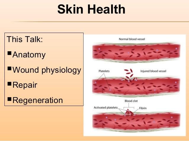Skin health part 2 wound healing