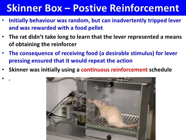 Skinner Box - VCE U4 Psychology