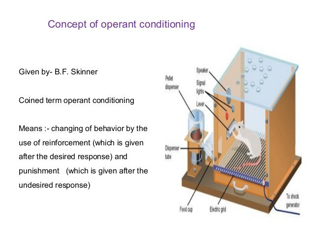operant conditioning experiment essay