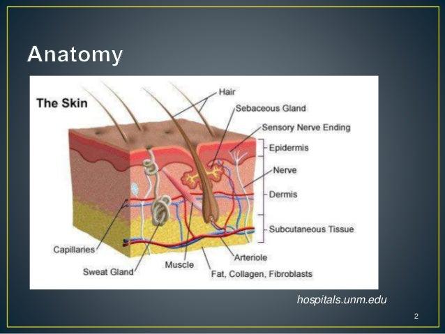 Skin &soft tissue infection Slide 2