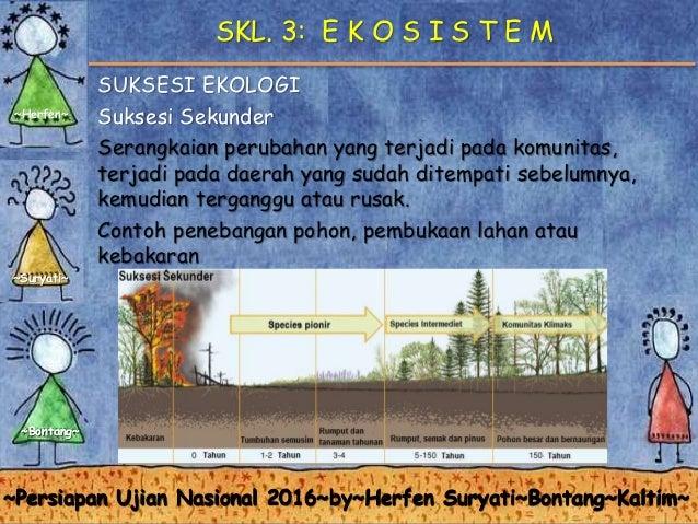 Skl 3 ekosistem