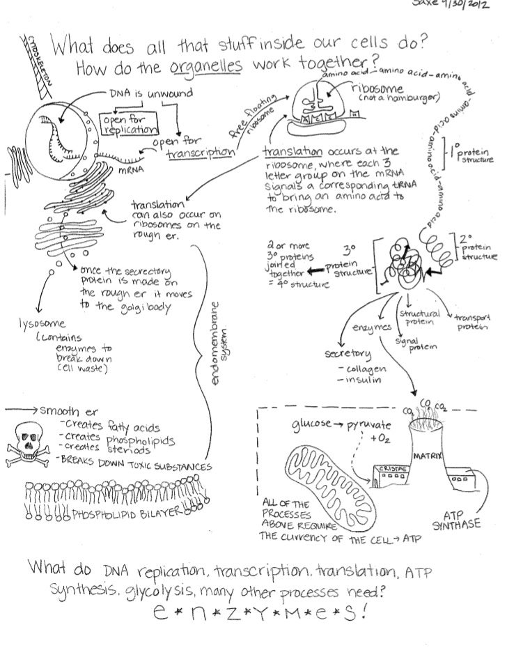 Cell Function Concept Map