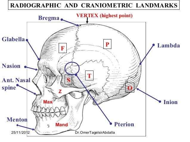 Anatomy of the Skull