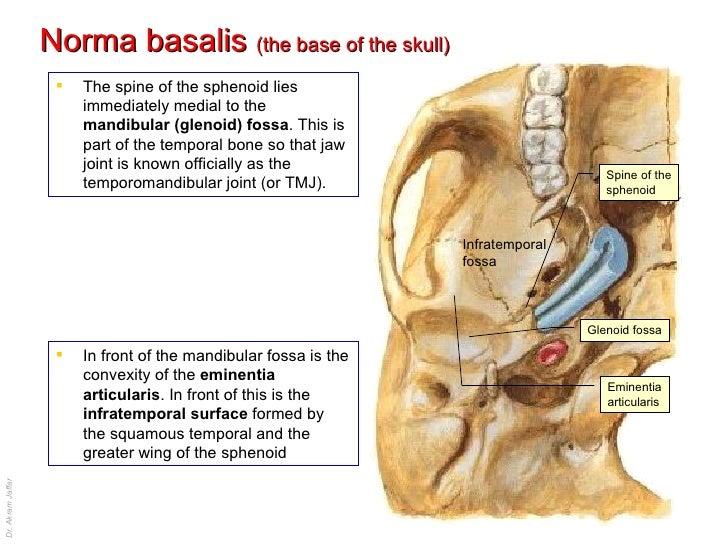 skull the normas, Human Body