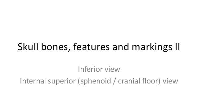 Skull bones, features and markings II Inferior view Internal superior (sphenoid / cranial floor) view