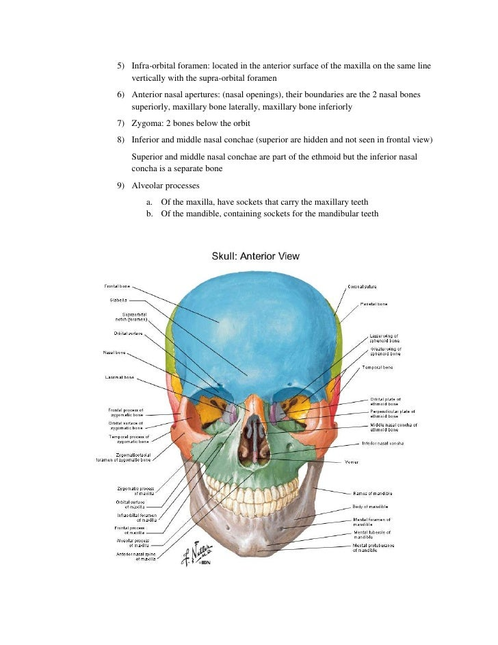 Functional Human Anatomy Notes Essay Service Djassignmentbarl