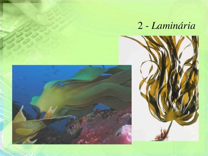 2 - Laminária