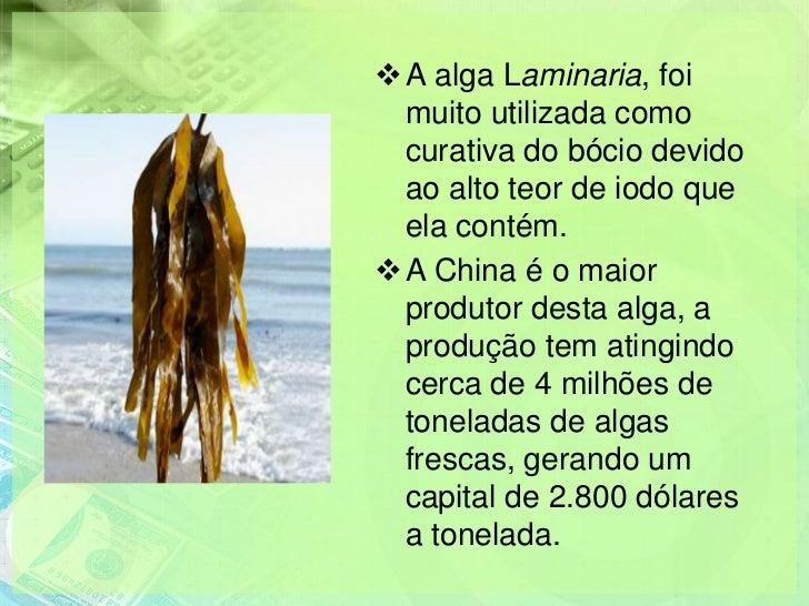 A alga Laminaria, foi muito utilizada como curativa do bócio devido ao alto teor de iodo que ela contém.A China é o maio...