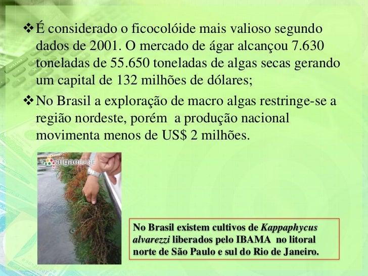É considerado o ficocolóide mais valioso segundo dados de 2001. O mercado de ágar alcançou 7.630 toneladas de 55.650 tone...