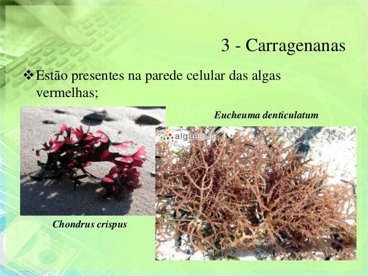 3 - CarragenanasEstão presentes na parede celular das algas vermelhas;                                Eucheuma denticulat...