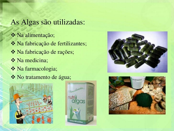 As Algas são utilizadas: Na alimentação; Na fabricação de fertilizantes; Na fabricação de rações; Na medicina; Na far...