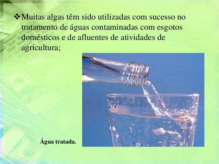 Muitas algas têm sido utilizadas com sucesso no tratamento de águas contaminadas com esgotos domésticos e de afluentes de...