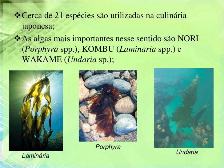 Cerca de 21 espécies são utilizadas na culinária japonesa;As algas mais importantes nesse sentido são NORI (Porphyra spp...
