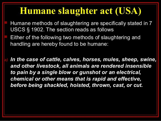 jewish singles in slaughter The report says kosher slaughter, or shechita, causes higher risk, pain and suffering in animals than methods that involve stunning jewish religious law requires animals to be conscious when their necks are cut.