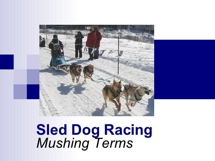 Mushing Terms Sled Dog Racing