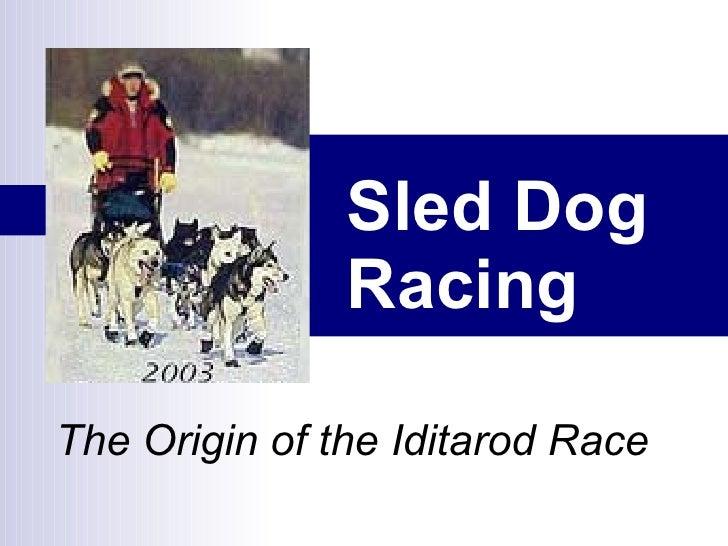 Sled Dog Racing   The Origin of the Iditarod Race