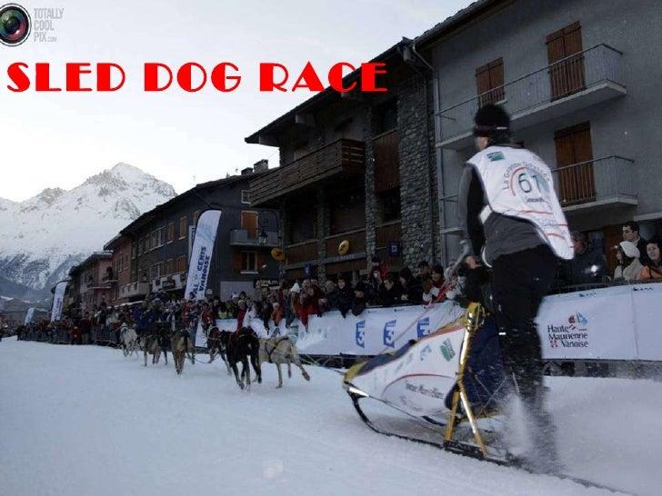 SLED DOG RACE DAC