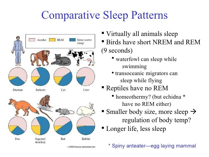 a short overview of the circadian rhythm The circadian rhythm is mostly comprised of a group of cells called the suprachiasmatic nucleus (scn), which is located in the hypothalamus it turns out that we all have a built in 24-hour day.
