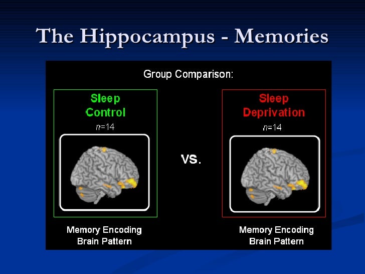 the science behind sleep walking The mere mention of a sleepover might conjure up thoughts of movies, popcorn,  sleeping bags, and  sleepwalking is a phenomenon that can occur in the first  few hours after falling asleep  that's the scientific word for talking in your sleep.