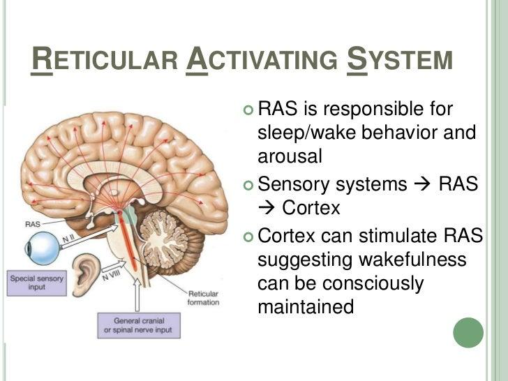 Sleep Anatomy Etc