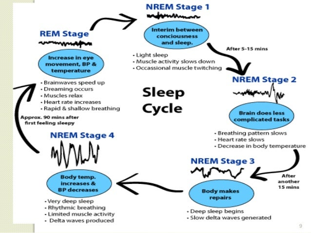 Normal Sleep And Sleep Disorders Beauteous What Is A Normal Sleep Pattern