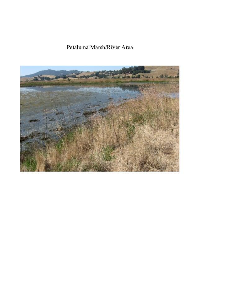 Petaluma Marsh/River Area