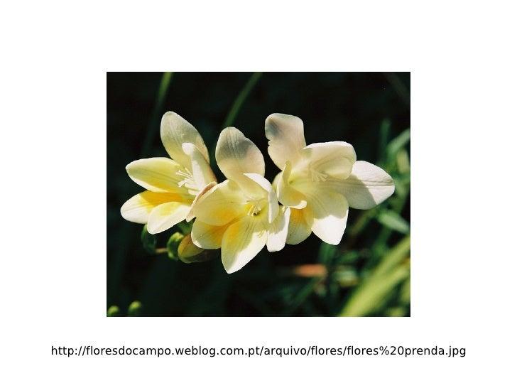 http://floresdocampo.weblog.com.pt/arquivo/flores/flores%20prenda.jpg