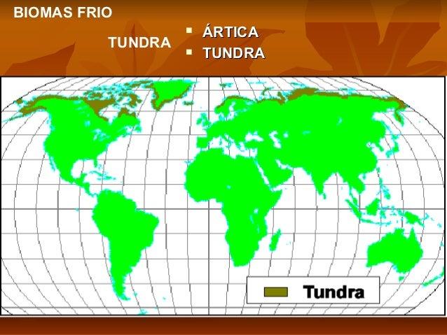 BIOMAS FRIO TUNDRA     ÁRTICA TUNDRA