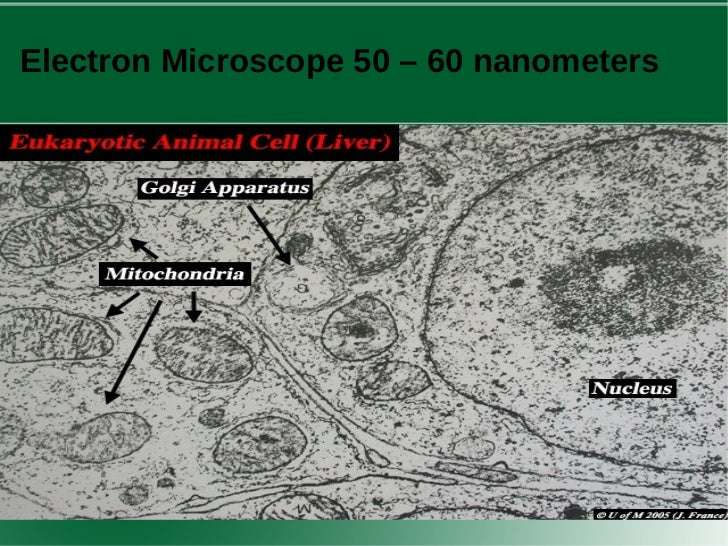 experiment to look at onion cells Look at the onion cells at low, medium, and high power observations: draw and label what you see low (4x) medium (10x) high (40x)  onion skin lab:.