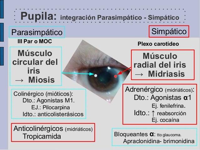 slide 2014 pupilas reflejos y farmacol u00f3gico