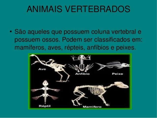 ANIMAISVERTEBRADOS ●    Sãoaquelesquepossuemcolunavertebrale possuemossos.Podemserclassificadosem: mamífero...
