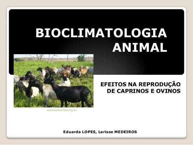BIOCLIMATOLOGIAANIMALEduarda LOPES, Larisse MEDEIROSEFEITOS NA REPRODUÇÃODE CAPRINOS E OVINOSwww.semiarido.org.br