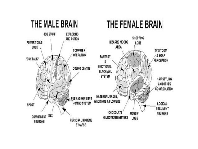 the difference between the thought process of men and women Study finds some significant differences in brains of men and women by michael price apr 11, 2017 , 3:00 am do the anatomical differences between men and women—sex organs, facial hair, and.