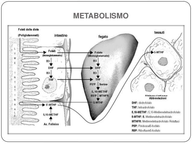 Acetaminofen metabolismo