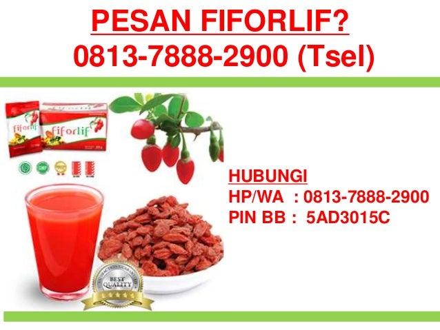 0813-7888-2900 (Tsel), Agen Fiforlif Pekanbaru, Beli ...