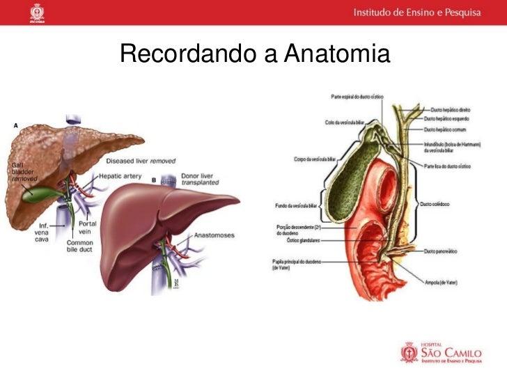 Recordando a Anatomia
