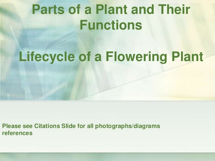 Parts of a Plant and Their FunctionsLifecycle of a Flowering Plant<br />Please see Citations Slide for all photographs/dia...