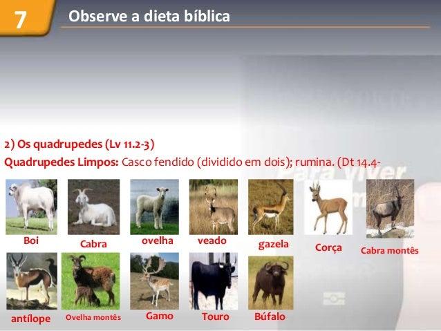 Slides da-dieta-biblica-imagens1 Slide 3