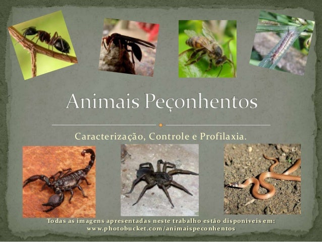 Caracterização, Controle e Profilaxia.Todas as imagens apresentadas neste trabalho estão disponíveis em:www.photobucket.co...