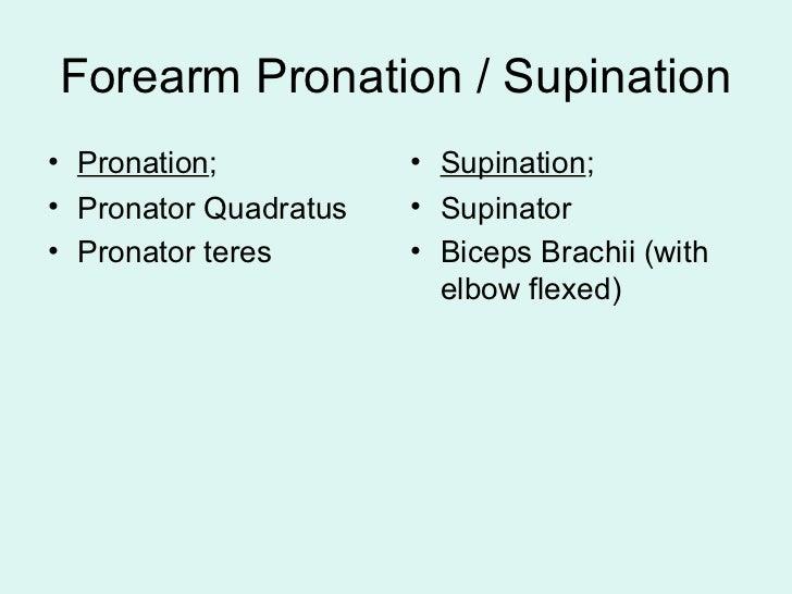 pronator quadratus and supinator relationship memes
