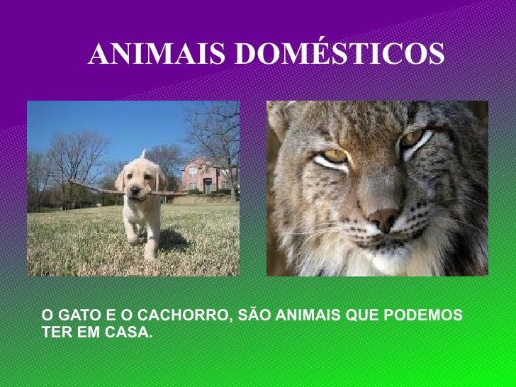 ANIMAIS DOMÉSTICOS O GATO E O CACHORRO, SÃO ANIMAIS QUE PODEMOS  TER EM CASA.