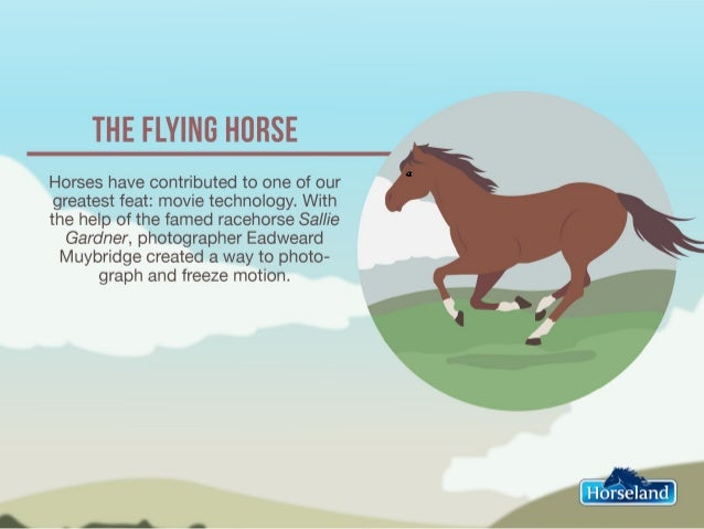 7 Things You Probably Didn't Know About Your Horse