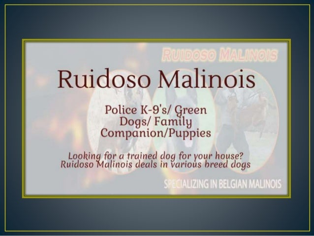 Ruidoso Malínoís  Police K-9's/  green Dogs/  Family Companion/ Puppies  L k' f 1 ' dd f h . v Ruigloslcllll/ iclllncoisrc...