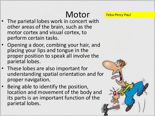 Functions of Parietal Lobe