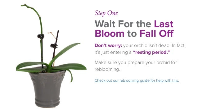 Phalaenopsis Orchid Fertilizing Made Easy
