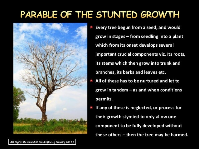 Every tree begun from a seed, and wouldEvery tree begun from a seed, and would grow in stages – from seedling into a plant...