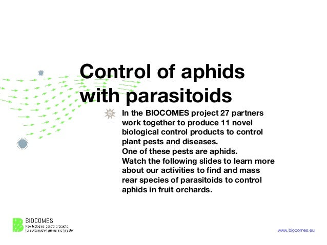 www.biocomes.eu Control of aphids with parasitoids In the BIOCOMES project 27 partners work together to produce 11 novel b...